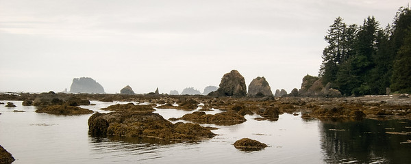 The Pacific coast in Olympic National Park, 2003