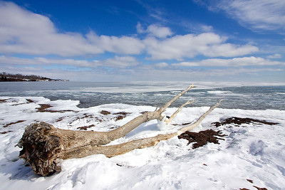 A large tree cast up onto the beach in Gooseberry Falls State Park.