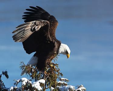 Bald Eagle Landing 2, Seymour Lake, Vt