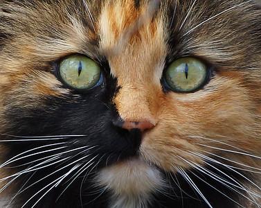 Cat Eyes, Holland, VT
