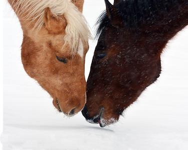 Horses In Snow, Irasburg, VT