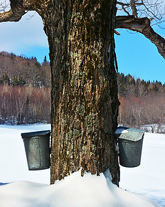 Sugaring, Westmore, Vt