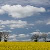 Northumberland April 2017a