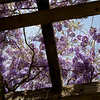 Upward view through a shade structure at the Navarro Vinyards in the Anderson Valley of California