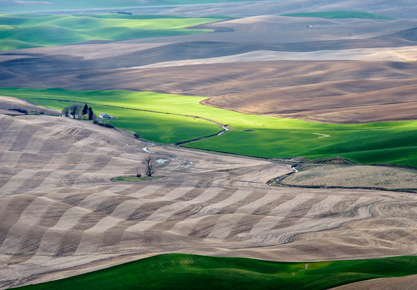 One more view of the Palouse region from the Steptoe Butte, near Colfax, Washington.