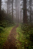 Pathway Into the Foggy Woods - Oregon
