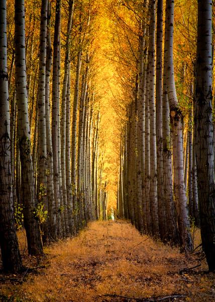 Tree Farm Scene 6 - Oregon
