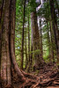 Avatar Grove - Vancouver Island, Canada