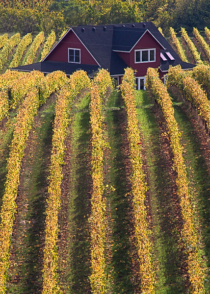 Vineyard and House - Oregon