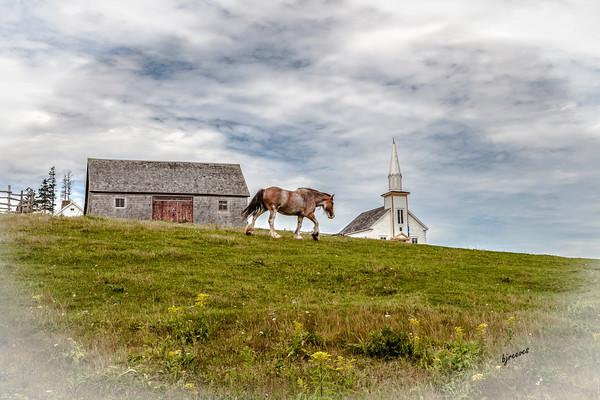 Horse in Highland Village in Iona, Nova Scotia, Canada