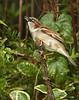 ISO 1600. Cloudy day, back yard birds