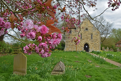 Cherry blossom at St Peters churchyard, Aubourn