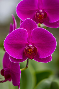 Vibrant Orchid