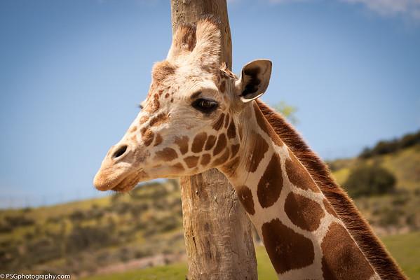 San Diego Zoo - Safari Trials