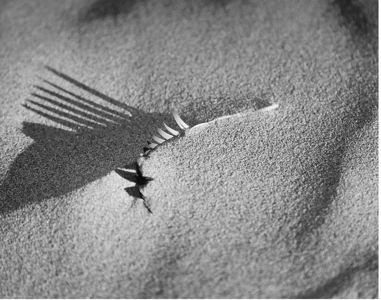 Buried Treasure Feather<br /> Cannon Beach, Oregon