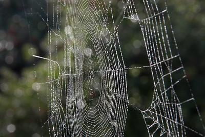 Misty Web