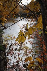 Cowichan Fall II