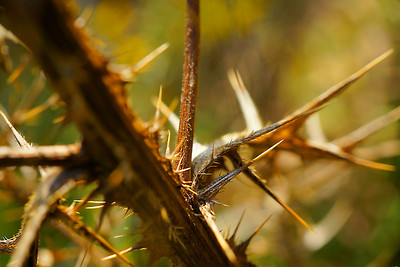Macro thistle thorns in the Fall