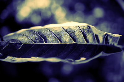 Curved leaf in blue monochrome