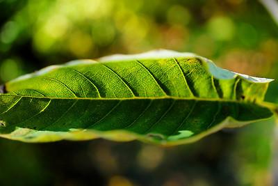 Curved leaf
