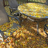 In about two hours, our favorite ash tree dumped all it's leaves straight down.  No wind to blow them to the neighbors.