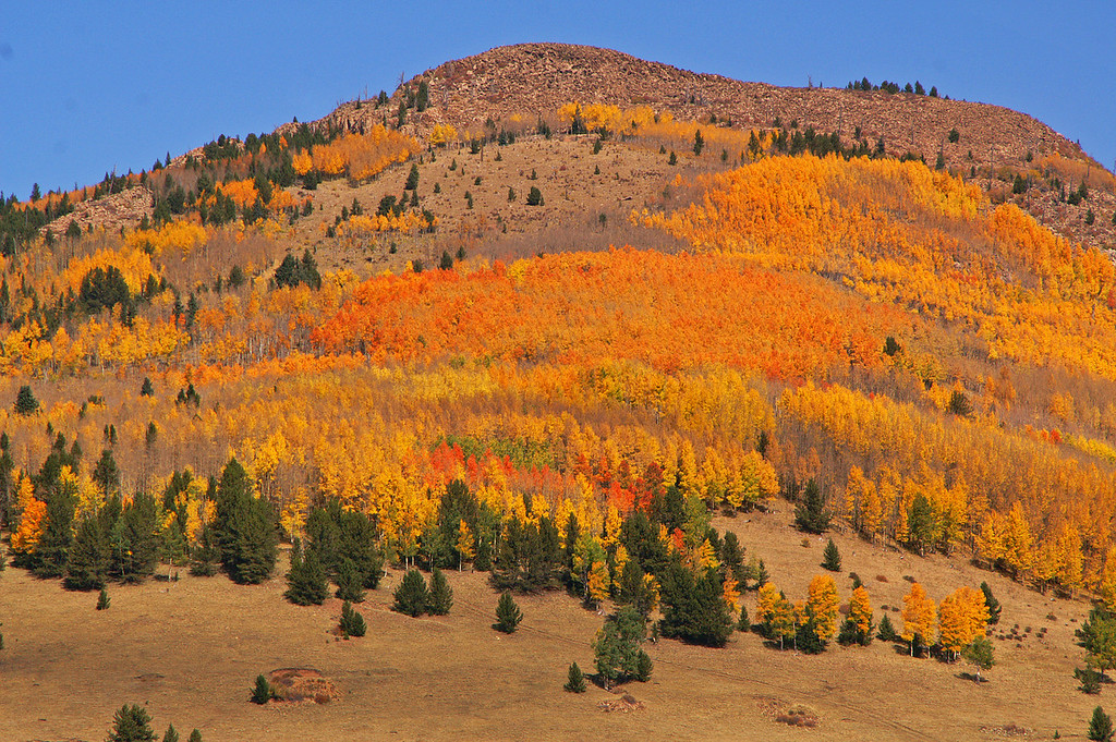 10-08-2010: A hillside between Cripple Creek and Victor, Colorado is alive with color on a fantastic fall day. Quite the variety of colors this year.