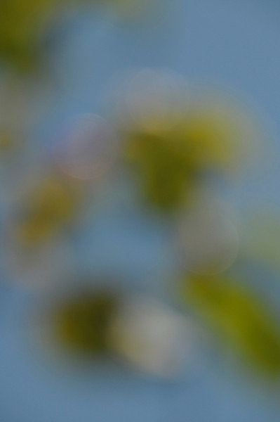 this is the original photo used for the edited version posted 9/26/12 to the DailyPhotos community...an out-of-focus image of a limb on a honeysuckle bush
