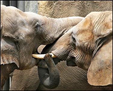 Elephants San Diego Zoo
