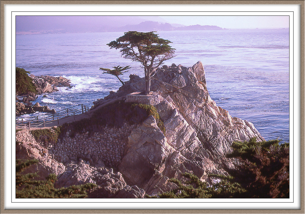 The Lone Cyprus17 Mile Drive Monterey CA, Nov 7, 1978  Kodachrom 64 slide scanned and photoshopped.