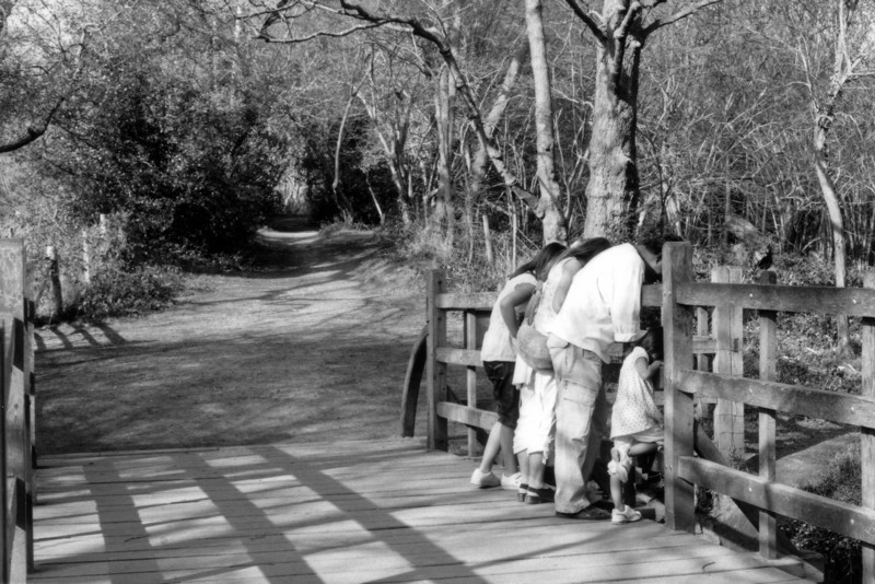 This is one of the favourite photographs I have taken.  The family are playing 'Pooh Sticks' on the real Pooh Bridge in Ashdown Forest.  I love the lighting, the mystery of the forest, the angle of the bowed heads and the leg of the little girl perched on the fence.  I took this on Ilford FP4 film but this is a scan of a print as I have misplaced the original negative.