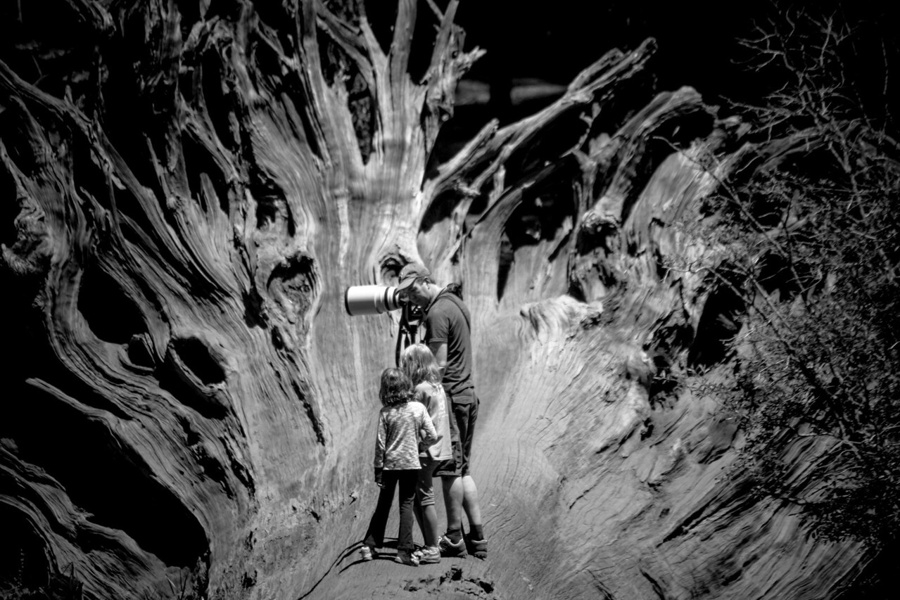 Standing on a fallen tree.  Sequoia Ca 2010 - Street shooting the national park system