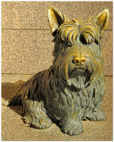 President Franklin Delano Roosevelt's constant companion, Fala, a Scottish Terrier, was the most famous dog in the world.