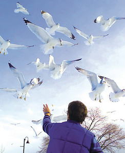 jhbuckler - Ali Buckler of Farmington nearly has the sea gulls eating out of her hand as they fly right over head as she tosses them bread at Kershaw Park on Saturday.