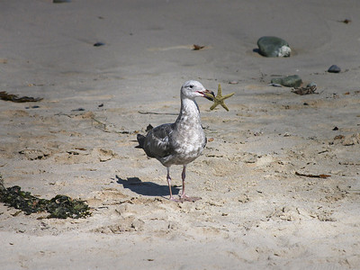 Gull gets a gold star ...