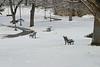 Snowy Park 0860