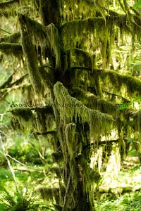 Moss y Tree
