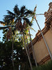 Balboa Park early evening on the way to the Old Globe.