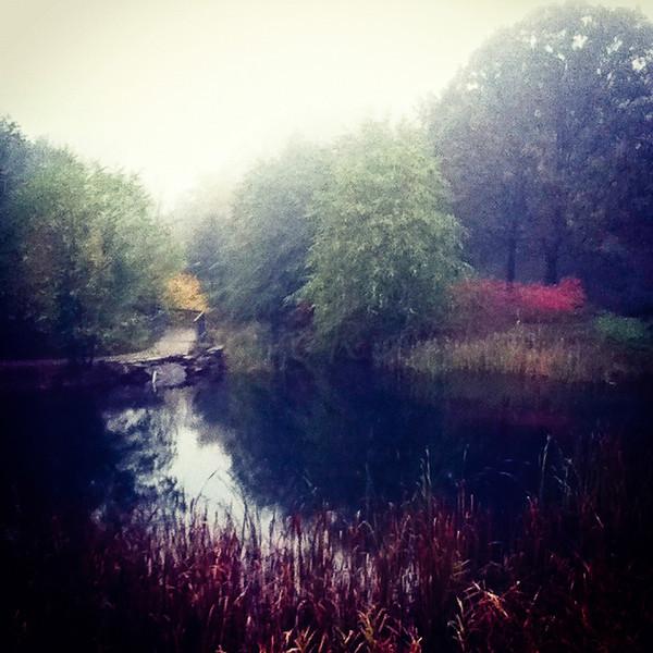 Foggy day at the EcoTarium upper pond.