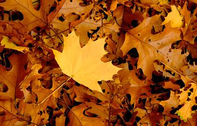 Fall Outlier - Nov 6