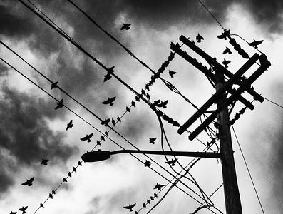 Teleconferencing Birds - Oct 18