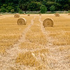 20 August 2011<br /> Straw bales in the field, Ross-on-Wye, Herefordshire, UK