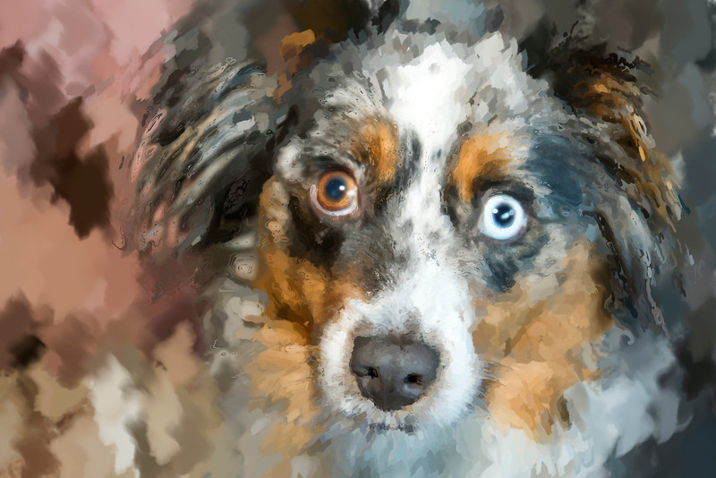 6.8.12 -Paintely effect of 'Gixer', an Miniature Australian Shepherd. Have a great day!
