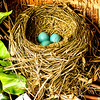 "4.18.12 ""Three baby blues"" - Have a great day!"