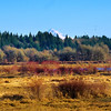 3.21.12 - Mt Hood. With all of the rains in SW Washington this field is now flooded.