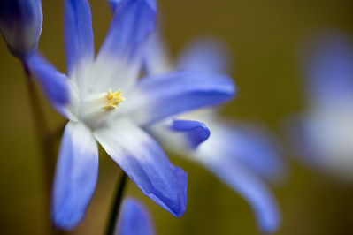 """Week 1: Shoot something you wouldn't normally shoot.  """"Easter Blues.""""  A very small flower lit by natural overcast light. Shot with the Tamron 90mm macro lens mounted on the D700.  A similar shot taken at the same time was my photo of the day for April 11."""
