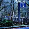 Wood Bridge Near Latourell Falls in Columbia River Gorge in Oregon