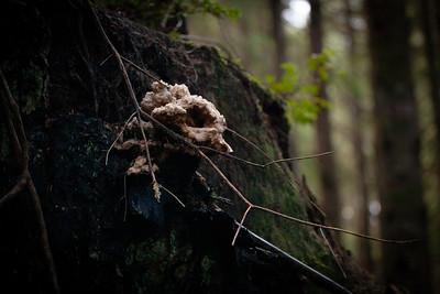 Mushroom Avian Skull