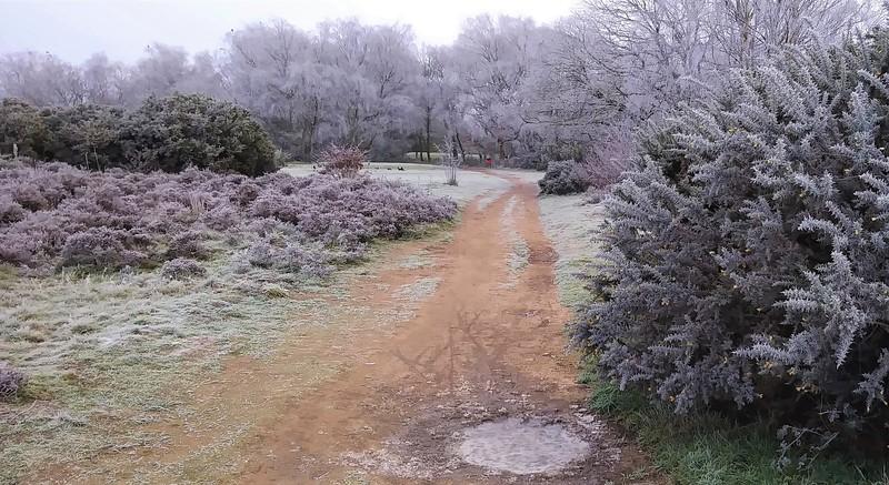 Rushmere Heath, Ipswich. January 2021