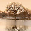 lone tree<br /> Forest Park