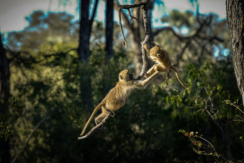 Monkeys at Play